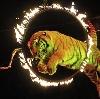 Цирки в Еленском
